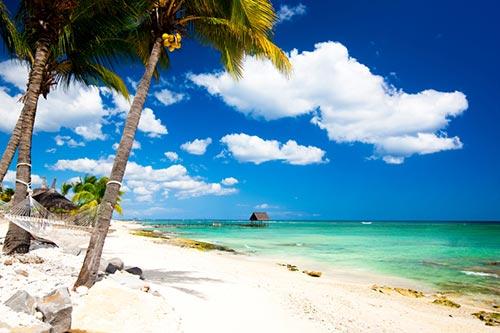 cocotier plage
